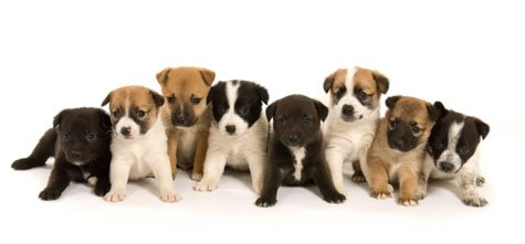 Buy From a Breeder or Adopt From a Rescue?