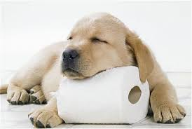 dog-toilet-roll