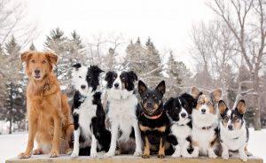 dog-line-up