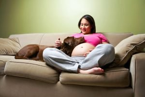 dog with pregnant woman