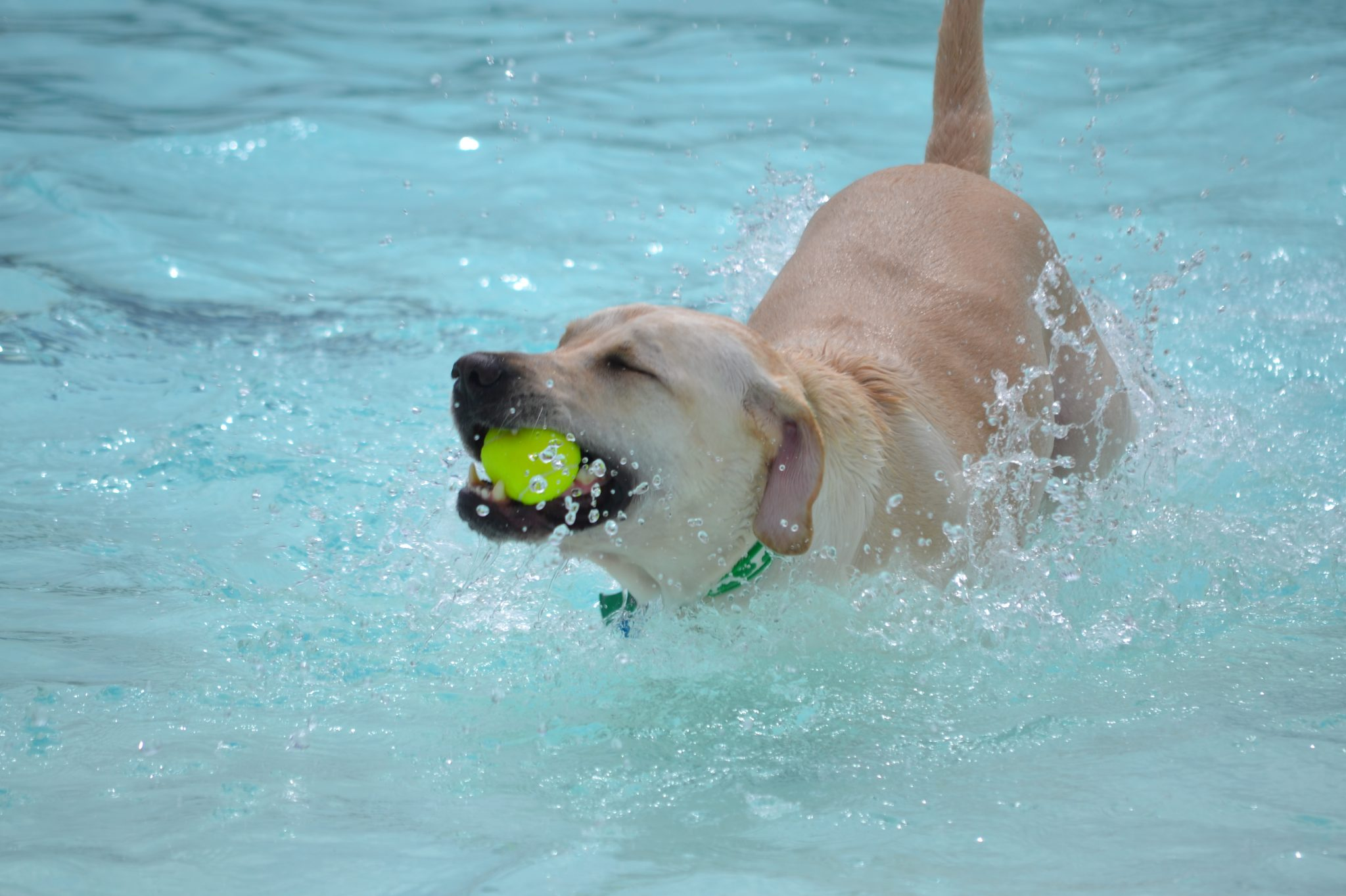 Water Safety Tips For Dogs Paws Playgrounds